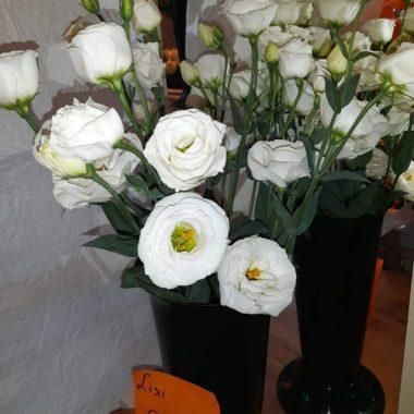 Szellő rózsa